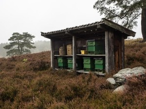 Beekeeping As A Profitable Money Maker 1